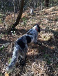 Un bon chien de chasse dans une vie